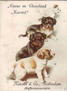 CACAO KARSTEL - FOUR PUPPIES | Flickr - Photo Sharing!