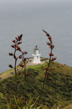 Cape Reinga, Tip of the North Island, New Zealand