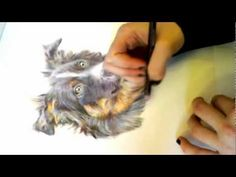 ▶ PART 2 Speed Drawing Tricolour Border Collie Dog Portrait in Coloured Pencils by Alice Ladkin - YouTube