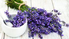 Levandule lékařská: Proč a jak tahle krásná bylinka pomáhá léčit tělo i duši