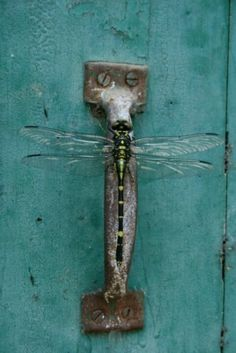 Dragonfly on door handle