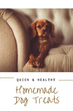 Quick and Healthy Homemade Dog Treat Recipes | The average American spends $20/month on dog treats. Click through for 5 recipes for homemade dog treats that are affordable, healthy, and easy to make!