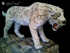 Like other animals around the world, marsupials of Australia are prone to extinction, usually as a result of habitat loss or predation by invasive species. Prehistoric Animals, Taxidermy, Habitats, Lion Sculpture, Statue, Vietnamese Food, Art, Google Search, Blog