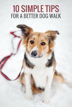 10 Simple Dog Walking Tips Everyone Should Use