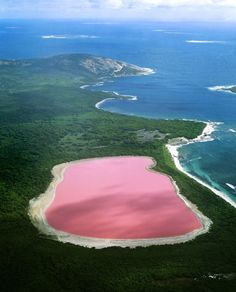 Lake Hillier, Australia-flamboyant rose pink color. The lake is surrouded by a rim of salt and dense woodland of paperbark and eucalypt trees. The color is permanent...and beautiful.