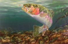 Rainbow Trout Pictures Free | End of the Rainbow fish painting