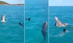 Fido meets flipper! The heartwarming moment a puppy and dolphin playfully splash around in the ocean together   Read more: http://www.dailymail.co.uk/travel/travel_news/article-4598908/Dog-dolphin-playfully-splash-ocean.html#ixzz4k2lZhuc1  Follow us: @MailOnline on Twitter   DailyMail on Facebook