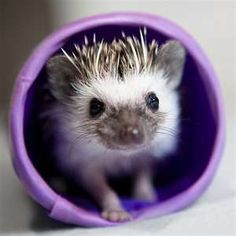 hedgehog hedgehog hedgehog!