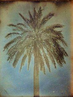 Palmier, Athènes - 1842 linéature © Girault de Prangey, courtesy Bibliothèque Nationale de France