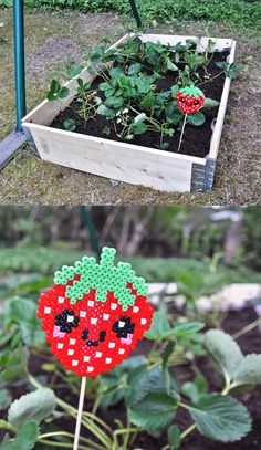 Today I planted strawberries in a little patch in our garden. Until real strawberries start growing this Hama strawberry can serve as inspiration. (Pattern modified from this)