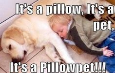 MEME - pillowpet - www.funny-pictures-blog.com...this reminds me of CJ. :)