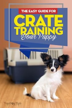 Crate training a puppy takes time and patience. It's not something that happens overnight, and you can't just lock Fido in there and expect him to learn. Puppy Training Tips, Crate Training, Training Your Dog, Training School, Potty Training, Training Schedule, Puppies Tips, Dogs And Puppies, Beagle Puppies