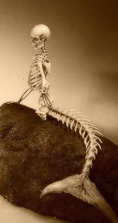 Mermaid skeleton...Really. It's on the internet. Everything is true on the internet.