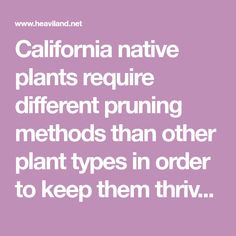 To Prune or Not to Prune: A Guide for Maintaining California Native Plants