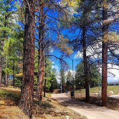 Where else does your walk to class lead your through the forest  #NAU #campuswalks #forest #naturevibes
