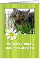 Birthday Noms Has No Caloreez, cat eating grass Card by Greeting Card Universe. $3.00. 5 x 7 inch premium quality folded paper greeting card. Birthday cards & photo Birthday cards from Greeting Card Universe will bring a smile to your loved ones' face. Send a paper card to your friends and family this year. Let Greeting Card Universe help you find the best birthday card this year. This paper card includes the following themes: corrie kuipers, happy birthday, and ...