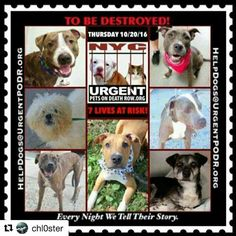 THE KILL LIST FOR THURSDAY 10-20-16ALL AVAILABLE @NYCDOGS.URGENTPODR.ORG  PLEASE SHARE NOW TO SAVE A LIFE