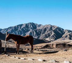 ➡➡Esto es paz, es vida.👌 🚗Tafi del Valle, Tucumán, Argentina.  #photography #picoftheday #photooftheday #landscape #landscaper #travel #travelgram #traveller #travelphotography #Argentina #tafidelvalle #tucuman #campo #estancia #rural #ig_arg #ig_argentina #tucumanturismo #southamerica #peace #nature #animals  @campo_argentino
