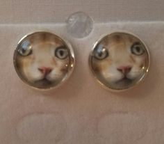 Awesomely Weird Stuff From China Stupid, Weird, China, Cats, Fun, Stuff To Buy, Gatos, Outlander, Kitty