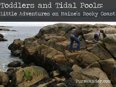 Maine, travel with kids, Maine coastline, bring your toddlers! #travel