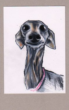 Italian Greyhound art. Pippa for prime minister. 4 x 6 inches. Colour pencil on white paper. https://www.etsy.com/shop/JimGriffithsArt?ref=hdr_shop_menu