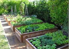 garden beds Dont let bad soil stop you from planting an edible garden. The solution Raised garden beds. They increase yield and reduce the work. Its no wonder raised garden beds are the kitchen gardeners secret weapon. Potager Garden, Veg Garden, Vegetable Garden Design, Edible Garden, Vegetable Gardening, Veggie Gardens, Fruit Garden, Vegetable Bed, Vegetables Garden
