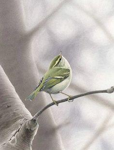 Yellow-browed Warbler - Ian Lewington Most Beautiful Birds, Wildlife Art, Yellow, Animals, Shabby Chic Decorating, Animales, Animaux, Animais, Animal