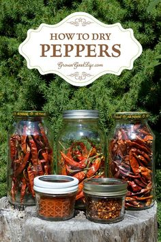 Drying your pepper harvest is an excellent way to preserve peppers. Dehydrating concentrates the flavor and heat of the peppers. Store fully dried peppers in airtight jars. You can add the dried peppers to soups, stews, or chilies.