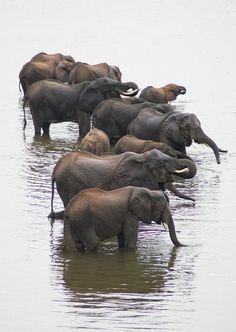 Chobe, Botswana. Elephants are Zen....