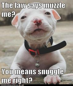 Looking for Pitbull shirts and apparel? Dog Zoned is your one stop shop for the BEST Pitbull merchandise in the world. Love My Dog, Cute Puppies, Cute Dogs, Dogs And Puppies, Doggies, Awesome Dogs, Baby Animals, Funny Animals, Cute Animals
