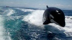 Lutz couple has a whale of a tale to tell.