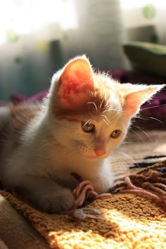 CyBeRGaTa - Cats, Memes, New Mexico - saturnastic: Prrrrrr, love this kittie :3. He is...