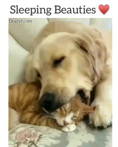 Dont worry, he didnt hurt the kitty - Tiere - Katzen Cute Funny Dogs, Cute Funny Animals, Cute Baby Animals, Animals And Pets, Cute Cats, Funny Cats, Funny Dog Videos, Funny Animal Memes, Dog Memes