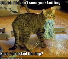 """""""Hum, Nooon ...., je n'ai pas vu ton tricot. As-tu demandé au chien ?"""""""
