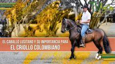 El Caballo Lusitano y su Importancia para el Criollo Colombiano -TvAgro ...