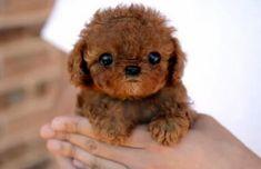 David Hasselhoff's new dog