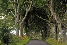 Dark Hedges, el camino de Juego de Tronos en Irlanda | Game of Thrones #Ireland