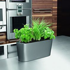 Design a kitchen herb garden to fit any lifestyle. Here are ten great herb garden ideas to get you started enjoying culinary herbs in the home garden. Herb Garden Kit, Herb Garden In Kitchen, Kitchen Herbs, Lawn And Garden, Kitchen Ideas, Self Watering Containers, Self Watering Planter, Herb Planters, Indoor Planters