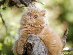 Кот фото, животные, кошки - Разные животные - Обои для рабочего стола