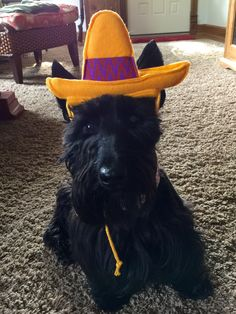 Fiesta Forever! Lucy @ The Adventures of Indy and Lucy on FB
