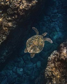 Sea Turtle Water Animals, Animals And Pets, Wildlife Photography, Animal Photography, Sea Turtle Wallpaper, Baby Sea Turtles, Tortoise Turtle, Turtle Love, Wild Creatures