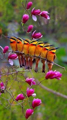 Kinds Of Birds, All Birds, Cute Birds, Pretty Birds, Most Beautiful Birds, Beautiful Nature Pictures, Exotic Birds, Colorful Birds, Beautiful Creatures