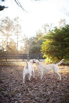 Britt Croft Photography and her two labradors Riley & Lexi on Itty Bitty & Fluffy