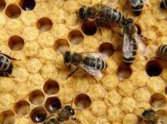 ZOLA TRICKS: 7 Wonders Of Beekeeping