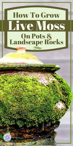 Garden Terrarium, Succulent Terrarium, Garden Plants, Landscaping On A Hill, Landscaping With Rocks, Asian Landscape, Landscape Rocks, Outdoor Patio Rooms, Outdoor Living