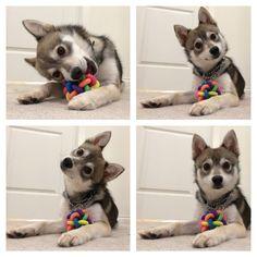 Do I hear...treats?! - more at megacutie.co.uk