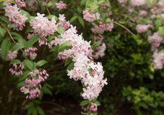Top 20 des plus beaux arbustes à fleurs - M6 Deco.fr Cactus, Rose, Patio, Culture, Garden, Plants, Single Flowers, Planting Flowers, White Flowers