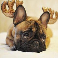 Santa's sweet little reindeer! ❤️❤️❤️❤️