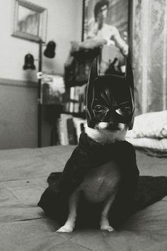 Da da da da da da da da DA...bat dog!  (he sure does take his Superhero job seriously)