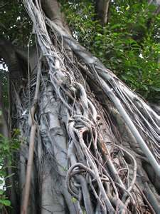 the BEST for climbing Twisted Tree, Old Trees, Tree Houses, Spirals, Tree Art, Garlands, Juices, Tangled, Autumn Leaves